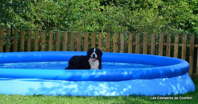 Dans sa piscine