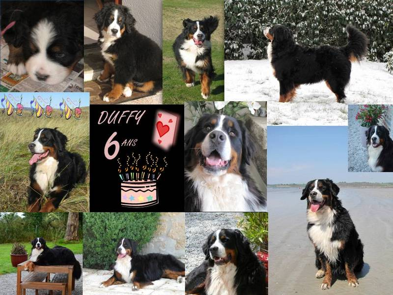 Duffy - 6 ans - 20 09 2014