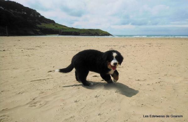 Peps à la plage