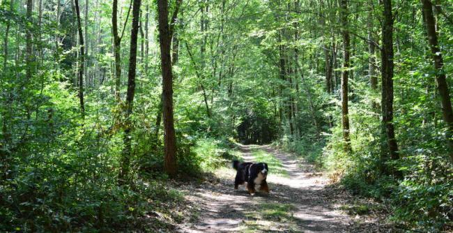 Dans le bois de Soulzmatt