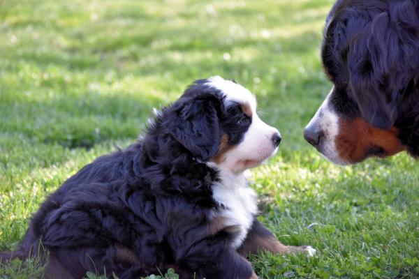 Bleu avec Mamie Charlotte 2004