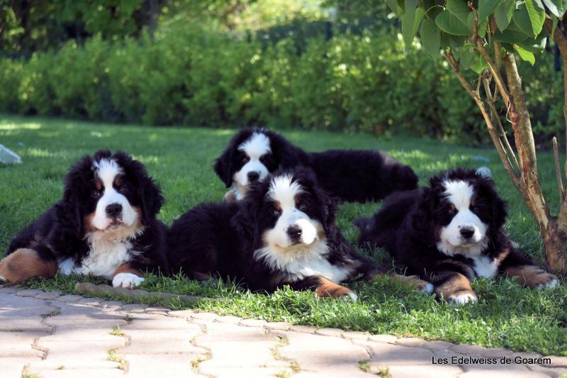 Le mini quatuor