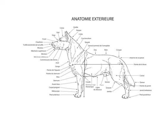 Anatomie extérieure